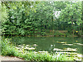 TQ0481 : Part of Farlows Lake by Robin Webster