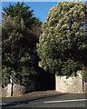 SX9474 : Trees at the entrance to the Abbey Coach House, 103 Dawlish Road, Teignmouth by Robin Stott