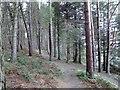 SK2199 : A walk in the woods at Langsett by Steve  Fareham