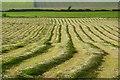 NY1341 : Farmland, Aspatria by Andrew Smith