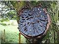 NY3603 : The magic money tree! by David Purchase