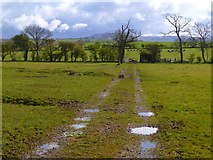 NY3841 : Track across pasture, Castle Sowerby by Andrew Smith