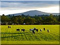 NY4237 : Pasture, Skelton by Andrew Smith