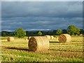 NY4141 : Farmland, Skelton by Andrew Smith