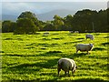 NY4240 : Pasture, Skelton by Andrew Smith