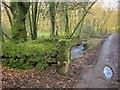 SX1567 : Lane below Trenay by Derek Harper