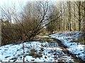 NY3857 : Hadrian's Wall Path by Mary and Angus Hogg