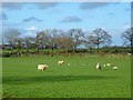 NY4437 : Pasture, Skelton by Andrew Smith