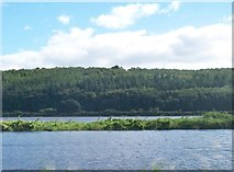 J1021 : View across the Newry Canal and Newry River towards Narrow Water Forest by Eric Jones