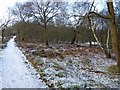 SK6167 : Bridleway Sherwood Forest Country Park by Steve  Fareham