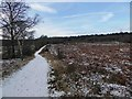 SK6067 : A snowy bridleway in Sherwood Forest Country Park by Steve  Fareham