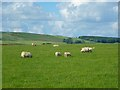 NY4940 : Pasture, Hesket by Andrew Smith