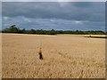 NY4957 : Farmland, Hayton by Andrew Smith