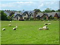 NY4936 : Pasture, Plumpton, Hesket by Andrew Smith