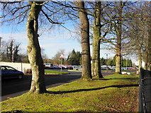 H4573 : Trees, Lisanelly Avenue, Omagh by Kenneth  Allen