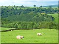 NY5242 : Pasture, Lazonby by Andrew Smith