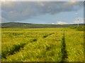 NY5250 : Farmland, Cumwhitton by Andrew Smith