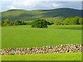 NY6333 : Pasture, Culgaith by Andrew Smith