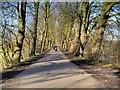 SD5427 : The Old Tram Road Towards Preston by David Dixon