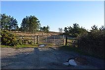 SY9485 : Track onto Slepe Heath by N Chadwick