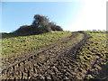 SU0317 : Pentridge: muddy tyre tracks on Pentridge Hill by Chris Downer