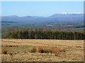 NY6630 : Moorland, Milburn by Andrew Smith