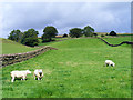 NY5944 : Pasture, Renwick, Kirkoswald by Andrew Smith