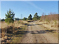 SU8762 : Lowland heath, Wishmoor Bottom by Alan Hunt