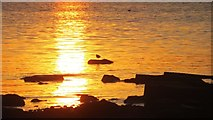 NT4377 : Sunset, Longniddry by Richard Webb