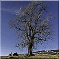 NN9861 : Tree and Ruin - Badyo by Peter Moore