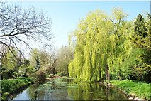 TF0919 : Weeping willows along the Bourne Eau, Lincolnshire by Rex Needle
