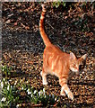 SU6474 : Cat and snowdrops by the church, Sulham, Berkshire by Edmund Shaw