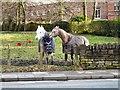 SJ9493 : Horses off Hilda Road by Gerald England