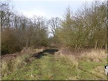 TF0627 : Track into the wood by Bob Harvey