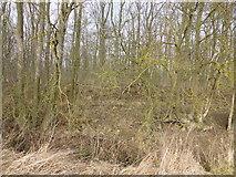 TF0627 : The edge of the wood by Bob Harvey