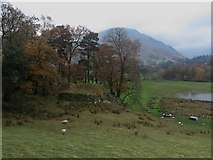 NY3916 : Pastures north of Side Farm by Graham Robson