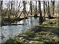 TL8395 : The River Wissey flowing towards Ickburgh by Adrian S Pye