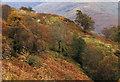 NM9845 : Trees on slope of Beinn Churalain by Trevor Littlewood