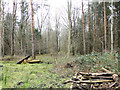 TM2491 : Spring Wood from the old military roadway by Adrian S Pye