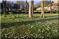 NC8500 : Scottish Snowdrop Festival 2015 - Dunrobin Castle Gardens (2) by Andrew Tryon