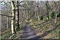 SK2479 : Path down to the Derwent by David Martin