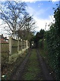 SJ8545 : Newcastle-under-Lyme: lane behind houses on The Avenue by Jonathan Hutchins
