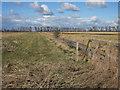 TL2287 : New Decoy Farm by Hugh Venables