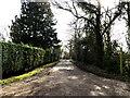 TM1576 : The Avenue the entrance to Pecks Farmhouse & Hall Farm by Adrian Cable
