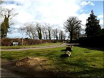 TM1677 : Dross Lane, Oakley by Adrian Cable