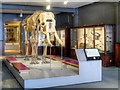 SJ8496 : Manchester Museum - The Manchester Gallery by David Dixon