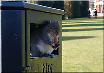 TQ2579 : Leave no litter by Peter Barr