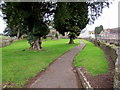 SO6713 : Yews near the NE entrance to St Ethelbert's Church in Littledean by Jaggery