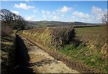 SX2975 : Lane to Uphill by Derek Harper