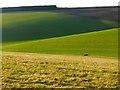 SU8289 : Farmland, Great Marlow by Andrew Smith
